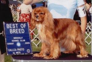 beth_best_of_breed