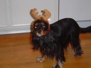 Maya at Christmas 2007