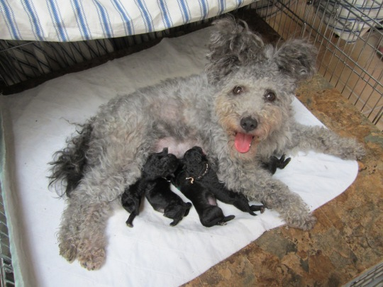 Bella and Newborn Pups