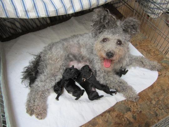 Bella and Newborn Pups