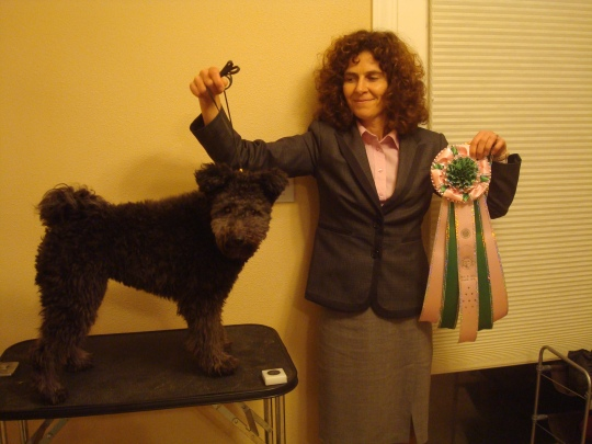 Knixa wins Best in Miscellaneous at Seattle Kennel Club 2013.