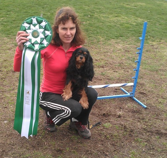 Minnie achieves her Master Agility Champion title at the Evergreen State Shetland Sheepdog trial on March 2nd, 2013. She is 4 years old.