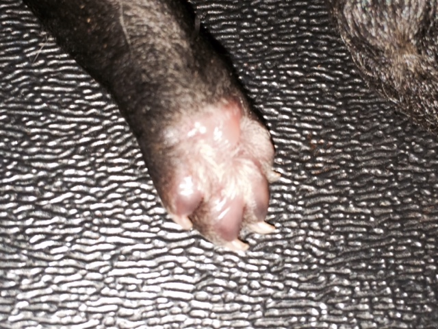 Puppy Paw